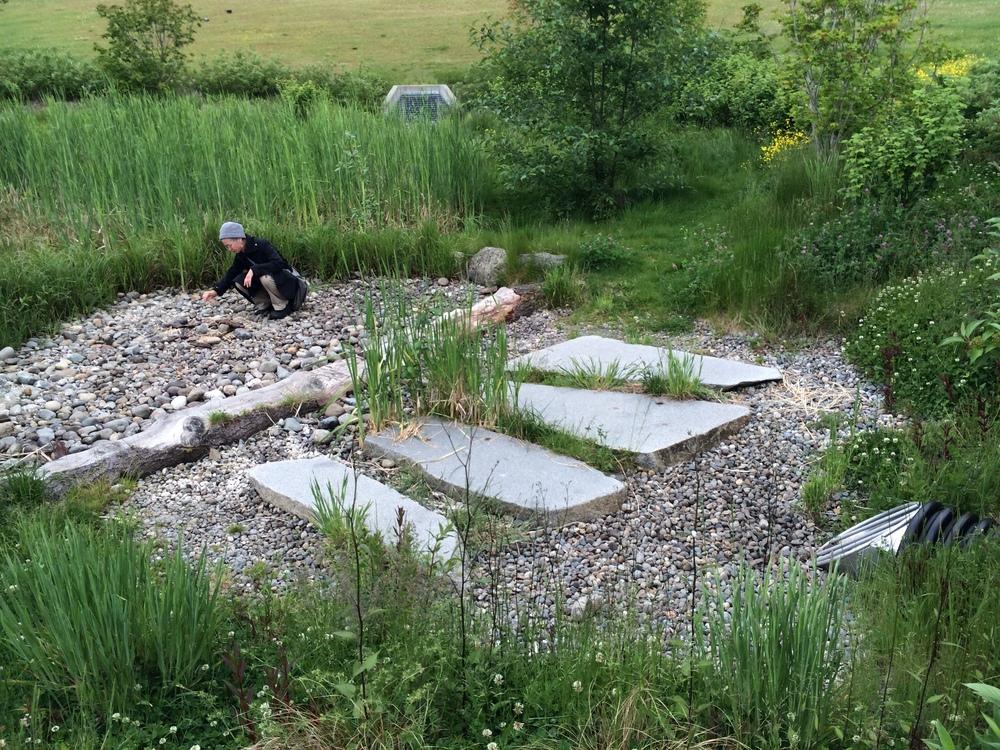 Jefferson park rain garden on beacon hill seattle